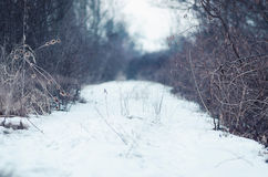 Snowy rural path with focus on branches. Snowy rural path with focus on side branches Royalty Free Stock Images