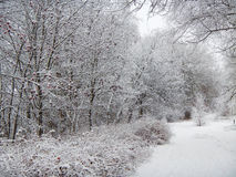 Snowy russian winter, Moscow region, central Russia, trees and bushes Royalty Free Stock Images