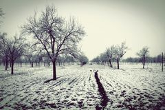 Snowy sad orchard Royalty Free Stock Image