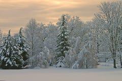 Snowy Scene Royalty Free Stock Image