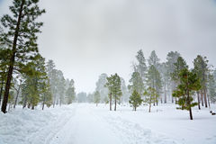 Snowy scene Royalty Free Stock Photos