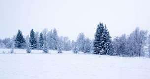 Snowy scene in Finland Royalty Free Stock Images