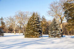 Snowy Scene. A snowy landscape with pines and bare trees Royalty Free Stock Image