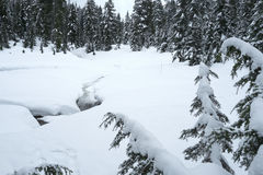 Snowy scene from Mount Seymour snowshoe trails Stock Photography