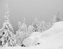 Snowy Scenery. Snowy trees in the forest Stock Images