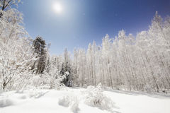 Snowy scenery in bright moonlight. With stars in blue sky royalty free stock image