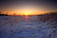 Snowy-Schilfe stockfotografie