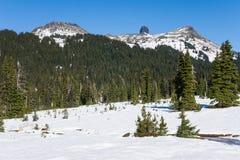 Snowy-Schwarzstoßzahn im provinvial Park nahe Pfeifer lizenzfreie stockfotografie
