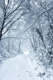 Snowy shape Stock Photography