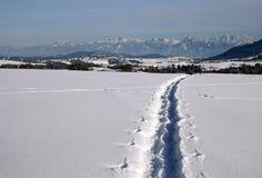Snowy shoe tracks Stock Photo