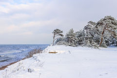 Snowy shore of the Baltic Sea Stock Image