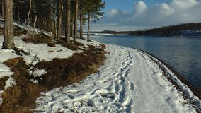 Snowy shore of the lake with tall pine trees, blue cloudy sky and the footprints in the snow. stock video footage
