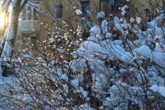 A snowy shrub stock photography