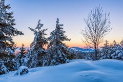 Snowy slope in the forest at sunset stock images
