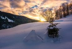 Snowy slope on forested hill at sunrise Stock Photo