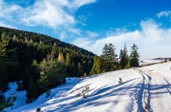 Snowy slopes and forested hills. Beautiful nature scenery in winter Carpathians Stock Photos