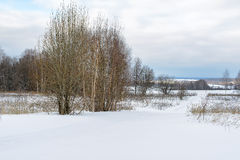 Snowy small country road in winter with trees Royalty Free Stock Images