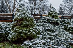 Snowy small spruces. And benchs in a garden royalty free stock image