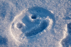 Snowy smile Royalty Free Stock Photography