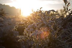 Snowy-Sonnenaufgang in der Wüste Stockbilder