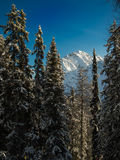 Snowy-Spitzen hinter Gebirgswald Stockbild