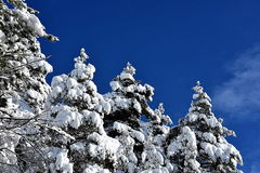 Snowy spruce and blue sky with clouds stock photos