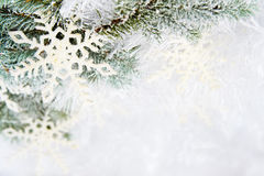 Snowy spruce branches Stock Photography