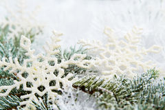 Snowy spruce branches Stock Photo