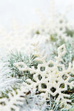 Snowy spruce branches Royalty Free Stock Photos