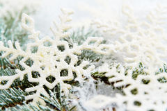 Snowy spruce branches Royalty Free Stock Images
