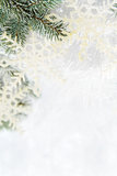 Snowy spruce branches Royalty Free Stock Photo