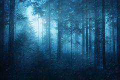 Snowy spruce forest background Stock Image