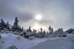 Snowy, spruce forest in winter in Beskidy Mountains Royalty Free Stock Images