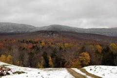 Snowy-Spur Lizenzfreie Stockbilder