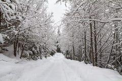 Snowy-Spur durch Korridor von Laubbäumen, Pfeifer, BC Lizenzfreies Stockfoto