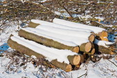 Snowy stack of timber in a forest Stock Photography