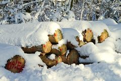 Snowy stack of timber Royalty Free Stock Image