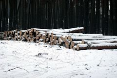 Snowy stack of timber in a forest Royalty Free Stock Photo