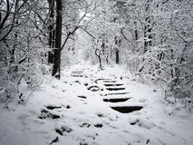 Snowy stairs in the forest Royalty Free Stock Image