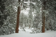 Snowy state. Royalty Free Stock Photos