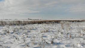 Snowy steppe with dry plants and weeds. Nature in winter, countryside. Smooth fly forward over the land.  stock video footage