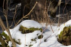 A snowy stone with moss Stock Photo