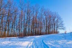Snowy-Straße auf sonnigem Winterwald Stockfotos