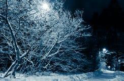 Snowy-Straße und Bäume nachts Stockfotografie