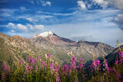 Snowy summit and pink flowers Royalty Free Stock Image
