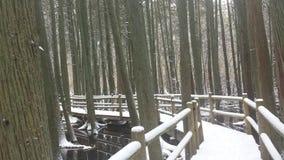 Snowy-Sumpf Lizenzfreies Stockbild