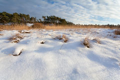 Snowy sunny meadow Royalty Free Stock Image