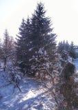 Snowy sunny winter stock image