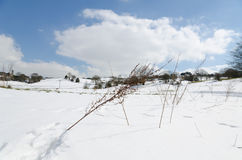 Snowy sunny wintery day in a european field with beautiful cold blue sky Stock Image