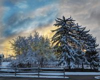 Snowy sunrise dawn. A snowy morning with thick heavy show clinging to trees with dramatic skies Royalty Free Stock Photography
